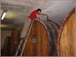Cantine d'Italia 2007 - guida per il turista del vino