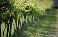 Le Doc del Piemonte: Canavese