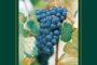 VINerdì Igp, il vino della settimana: Cabernet Franc 2013 de La Regola