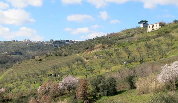 VINerdì Igp, il vino della settimana: Aglianico del Vulture 2008 Basilisco