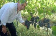 Azienda Bonavita: un solo vino, ma che vino!