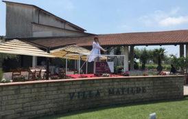 Villa Matilde, la rivincita dell'antico vinum falernum