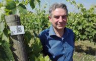 Come natura Crea: degustazione di vini da vitigni toscani antichi e rari