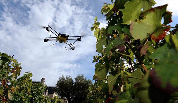 Drone della Cyberfed Agri di Rovereto in vigneto