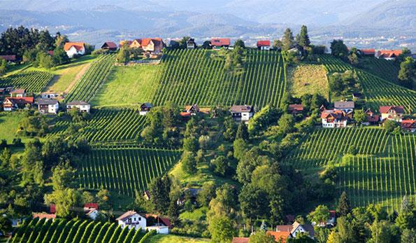 Le vigne sulla Schilcherstrasse