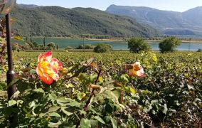 Alto Adige Wine Summit, vino e turismo per la prima volta a Bolzano per raccontare il territorio