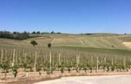 La sfida del Grignolino di Vignale Monferrato: Accornero Vs Oreste Buzio