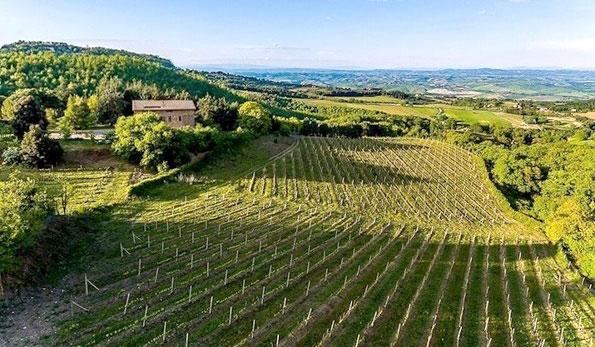 Cantina storica e vecchie vigne della Piombaia