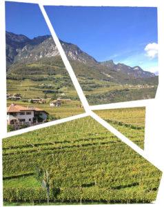Le vigne dell'Alto Adige viste dall'aereo