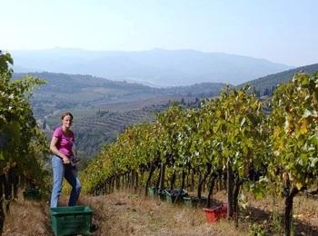 algtre vigne azienda San Polino