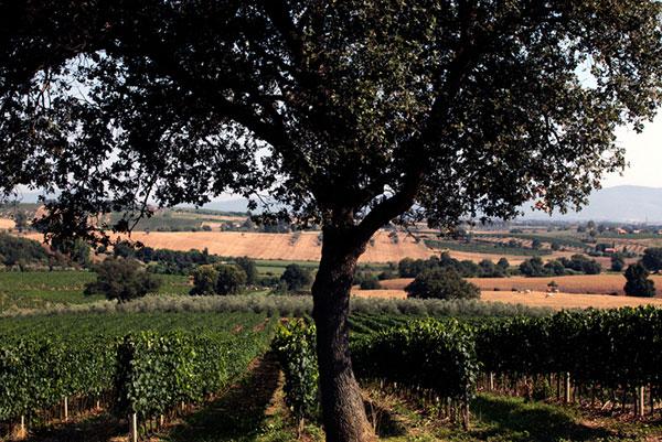 Paesaggio nel territorio del Morellino di Scansano
