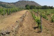 The Winefathers: diventare parente di un vignaiolo e condividerne i progetti