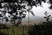 L'Arte della ceramica incontra i vini della Romagna