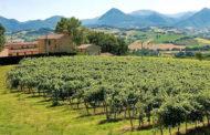 Il territorio di Matelica raccontato dai vini de La Monacesca