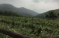 Vulcanei 2018: alla scoperta dei Volcanic Wines