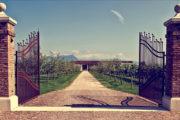 VINerdì Igp, il vino della settimana: Garda Rosé Brut Metodo Classico 2013 - Olivini