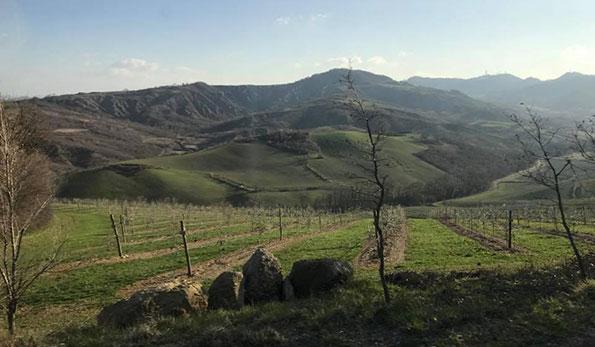 Cantina Fratta Minore: a Castel San Pietro la passione di due medici realizza un sogno di vino