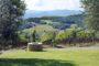 Produttori, un vino al giorno: Majolo Bianco 2010 - Zanchi