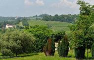 Alla scoperta dei vini vulcanici del Gambellara DOC: una terra da ricordare