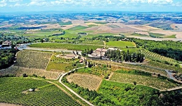 Vigneti Azienda Vinicola Costanti Montalcino