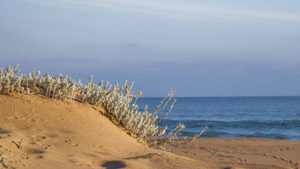 mandrarossa sabbia