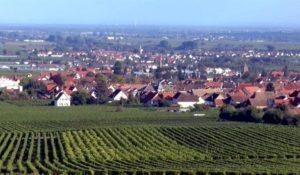 vigneti nel Palatinato