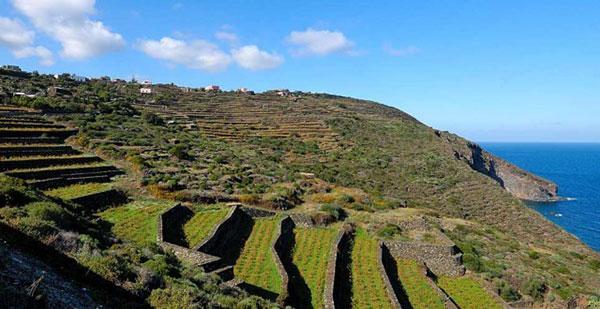 vigne terrazzate a Pantelleria