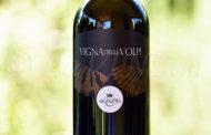 Produttori, un vino al giorno: Vigna delle Volpi Rosso 2017 - Val di Neto