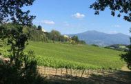 Un paio di riflessioni per il Consorzio del Brunello di Montalcino