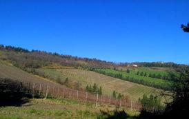 Da Predappio con amore: i vini di Noelia Ricci