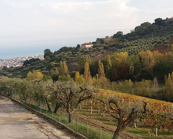 Panorama dall'azienda Terraviva