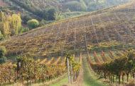 L'Abruzzo e il suo Montepulciano, un focus sulle colline teramane