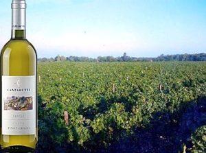 Friuli Pinot Grigio 2017 Cantarutti Alfieri