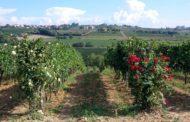 Vino Nobile di Montepulciano 2015 Gattavecchi