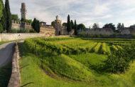 Vite in Campo 2019: da Conte Collalto 2 giorni dedicati alla viticoltura innovativa e sostenibile