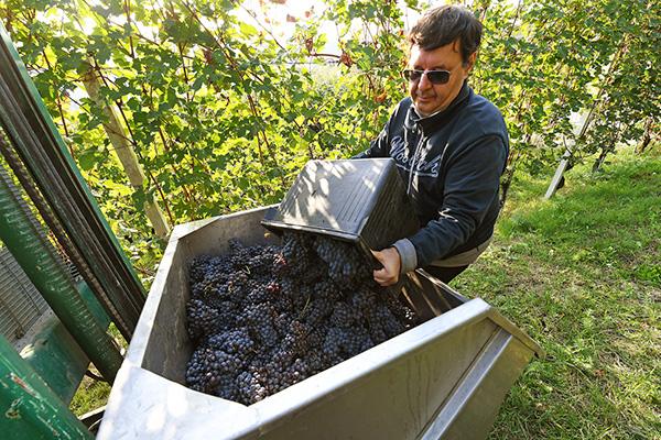 Luigi Vico e le sue vigne in Serralunga d'Alba