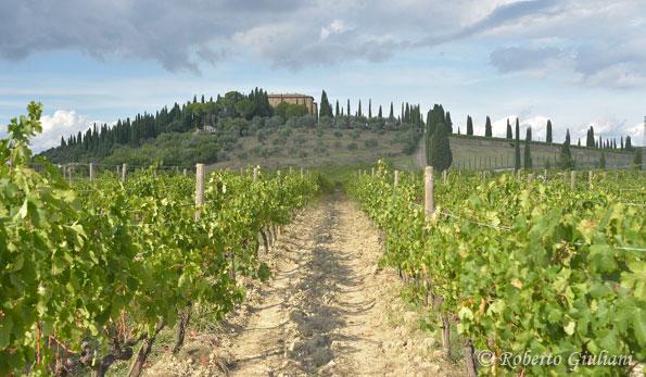 Argiano, vista delle vigne
