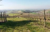 Non solo Vini ad Arte, il Consorzio Vini di Romagna mette in campo il progetto