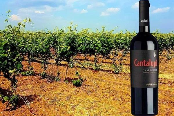"""Salice Salentino Rosso Riserva """"Cantalupi"""" 2012 dell'Azienda Agricola Conti Zecca"""