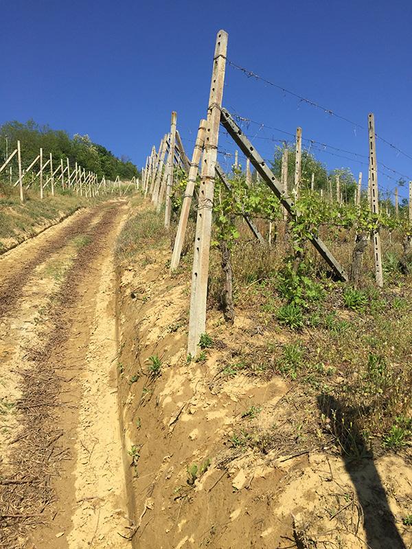 Sentieri tra le vigne del Roero