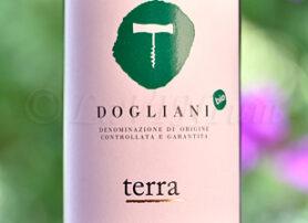 Dogliani Terra 2019