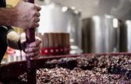 Il Vinco, vino rock dell'Alta Tuscia viterbese
