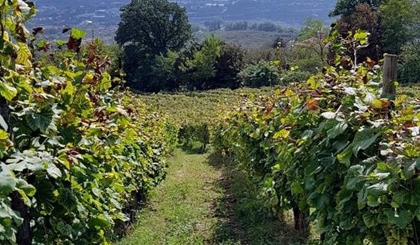 Il sole nel calice con il Fiano di Avellino 2016 delle Vigne Guadagno