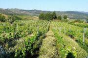 Pinot Noir Olho no Pé Reserva 2010 Folias de Baco