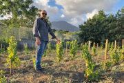 Andrea Matrone, il Vignaiolo che vive la vigna e dove possibile pianta alberi