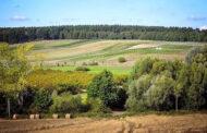 Modello Borgogna in Polonia: Winnica Miłosz