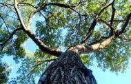 I racconti di Alda: L'albero che non c'è più