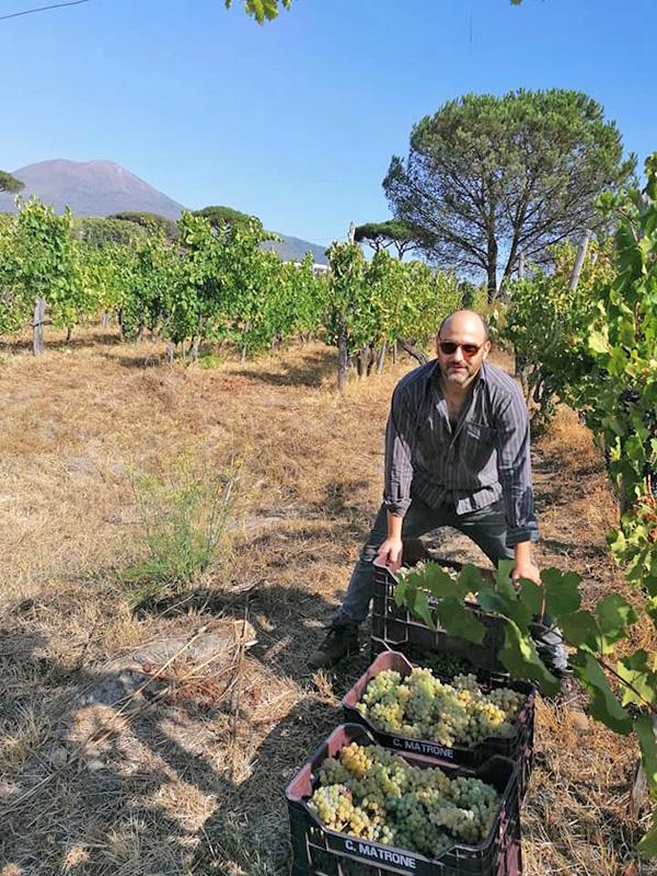 Andrea Matrone con l'uva appena raccolta
