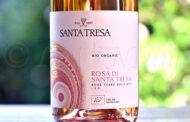 Rosa di Santa Tresa 2019 Santa Tresa