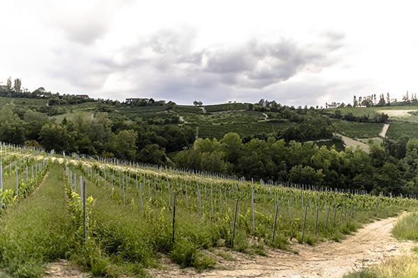 vigne azienda Réva